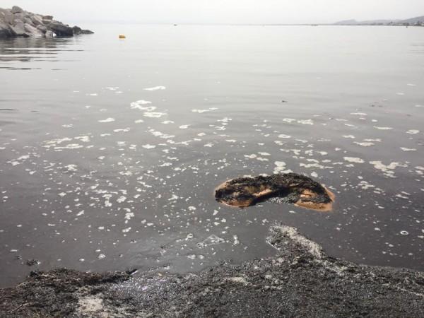 Pollution à la plage d'Ezzahra