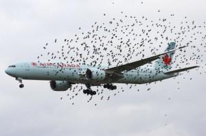 avion-oiseaux