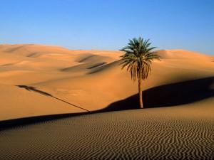 Désert - (01) - Sahara