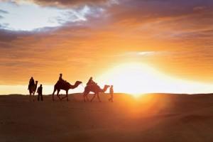 Tunisie, Douz, dÈsert, dromadaires
