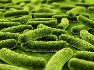 3d rendering of a bacteria