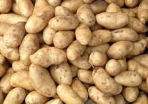L 39 importation de la pomme de terre alg rienne bloqu e par la tunisie - Pomme de terre coup de soleil ...
