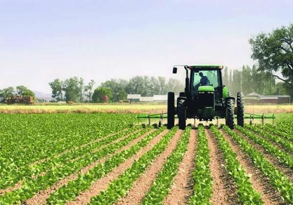 Agriculture tunisie