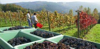 Le Vin Tunisien Parmi Les Meilleurs Au Monde Selon L Americain